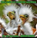 So-We-Became-Dandelions-Funny-Bird-Meme.jpg