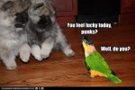Caique Threatens Puppies.jpg
