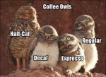 Coffee Owls.jpg