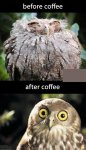 Owl Before and After Coffee.jpg